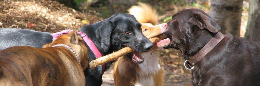 great Atltanta dog parks near new Brock Built homes