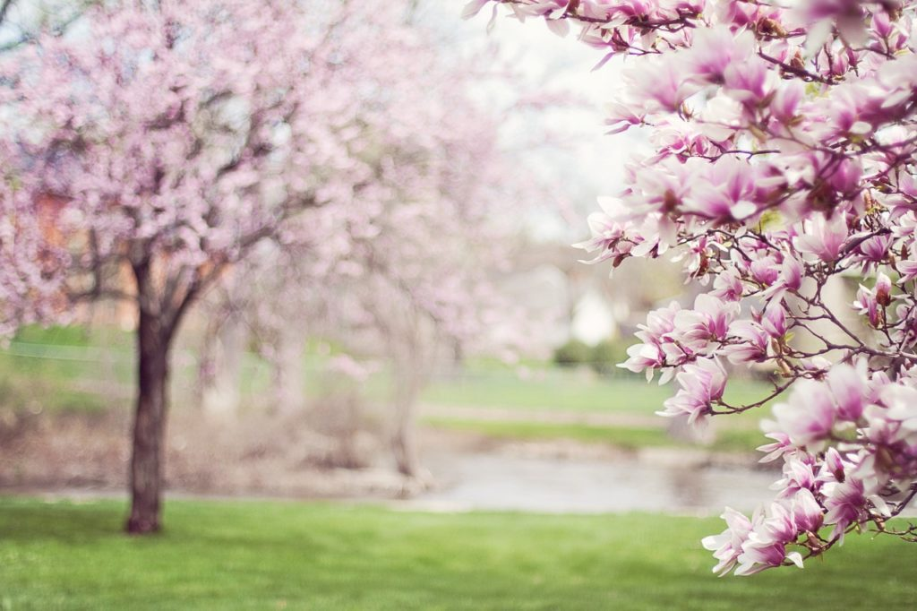 spring cleaning tips for new homeowners Atlanta