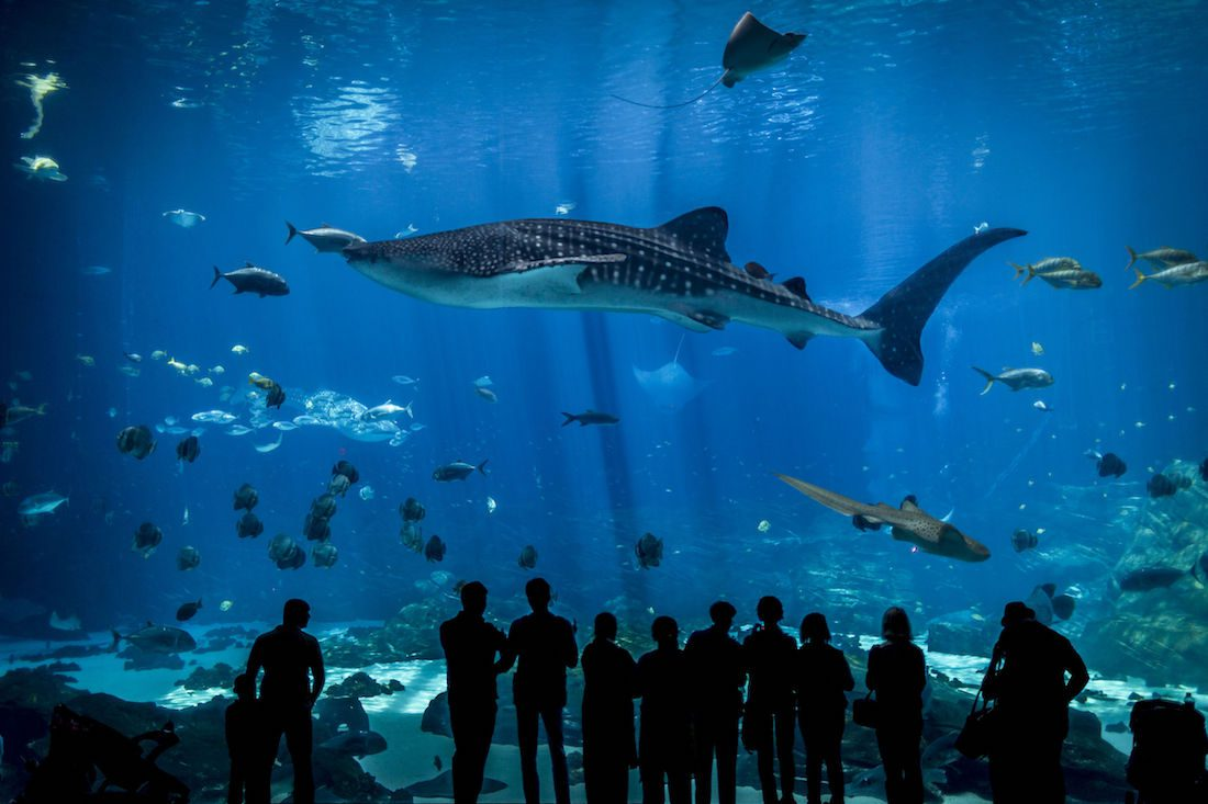 Georgia Aquarium - [Thomas Noitz] © 123RF com